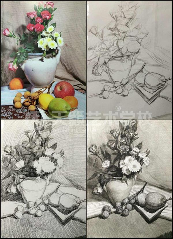 花卉静物素描步骤详解