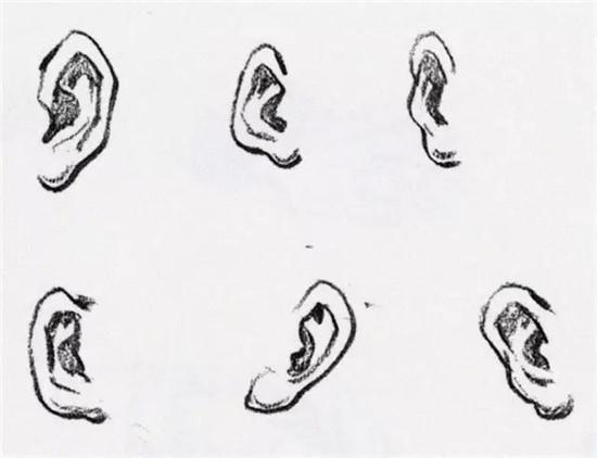 鼻子在面部正面中心的位置,形状像梯形楔子.