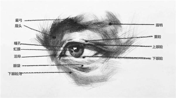 眼睛的基本结构.